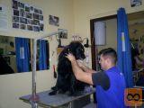 Tečaj striženja psov