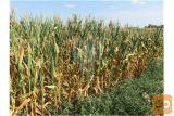 Kmetijska Zemljišča V Spodnji Polskavi